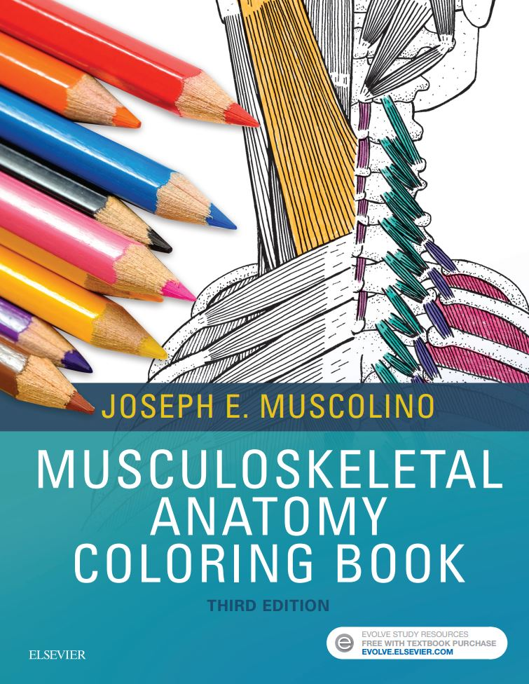 - Musculoskeletal Anatomy Coloring Book, 3rd Edition - Learn Muscles