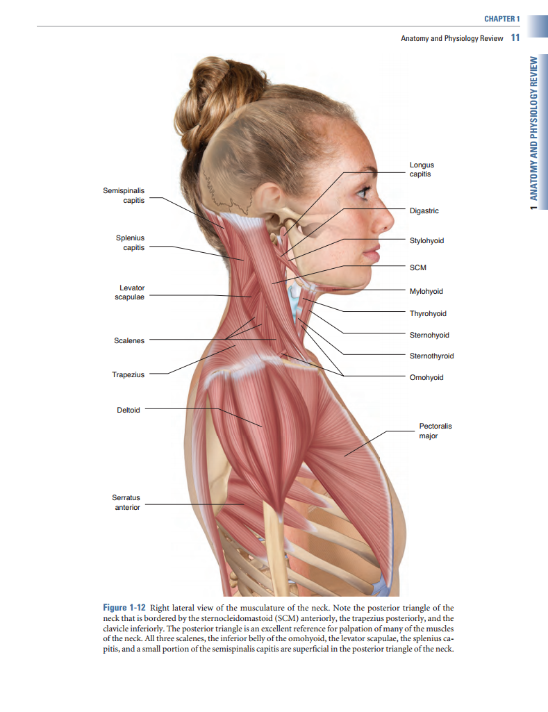 Advanced Treatment Techniques For The Manual Therapist Neck Learn