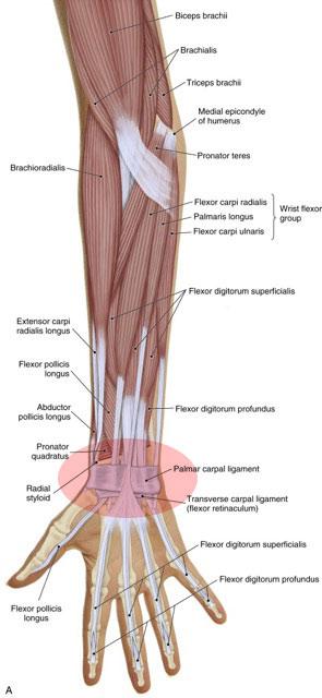 What Are The Causes Of Wrist Sprain Wrist Strain And Wrist Tendinitis