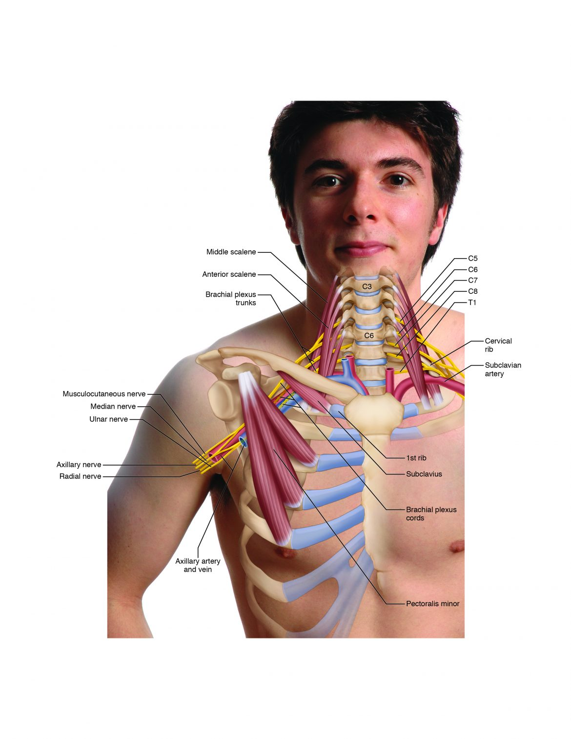 there are four types/locations of possible thoracic outlet syndrome seen here