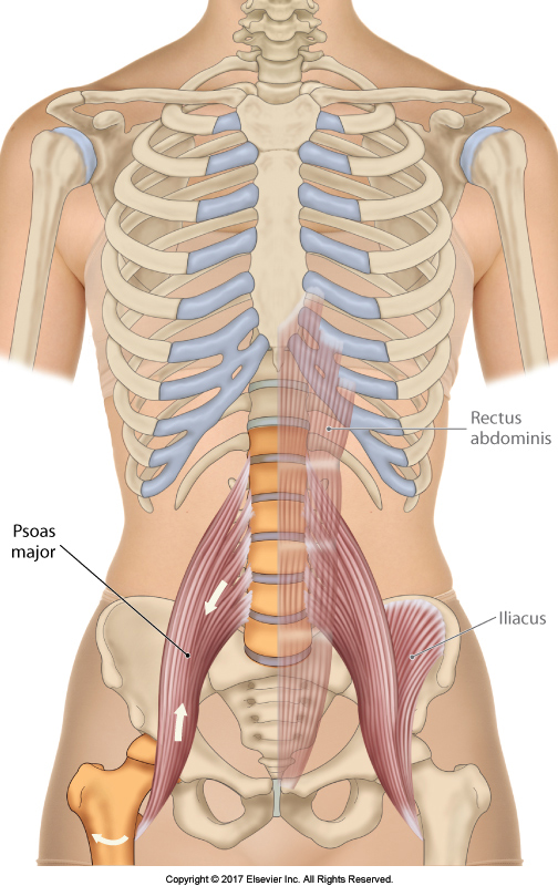Psoas Major crosses the hip and spinal joints
