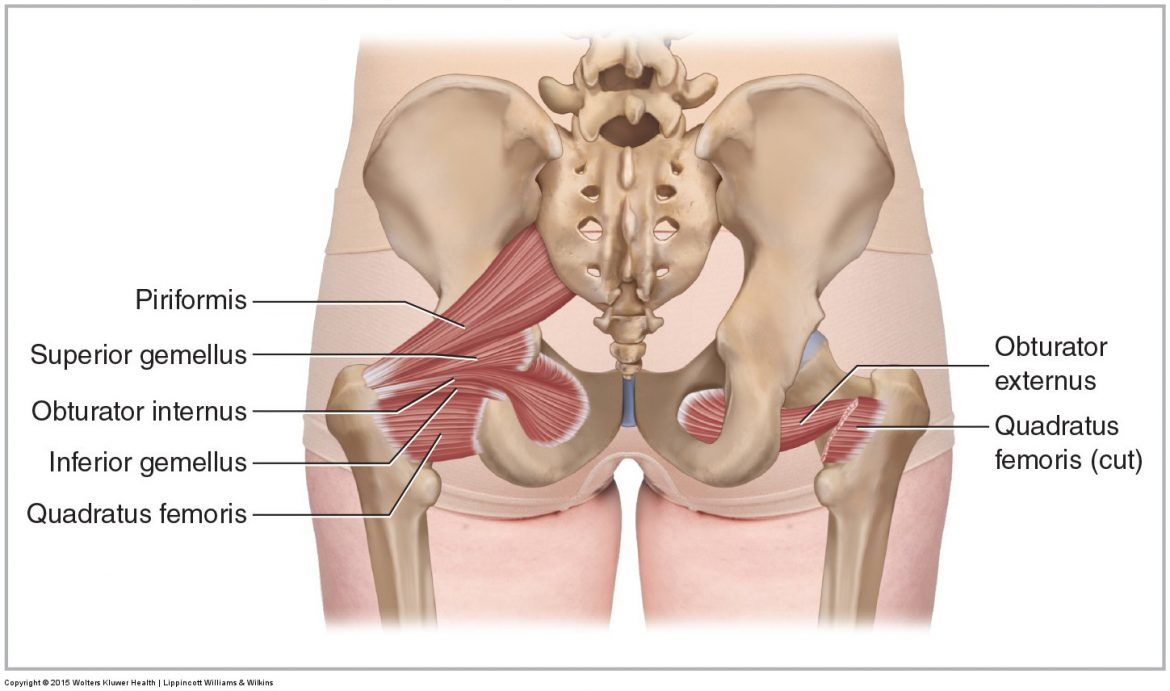quadratus femoris is one of the deep lateral rotator muscles of the hip joint