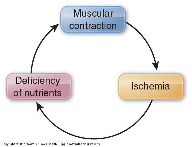 Contraction Ischemia cycle - genesis of a trigger point