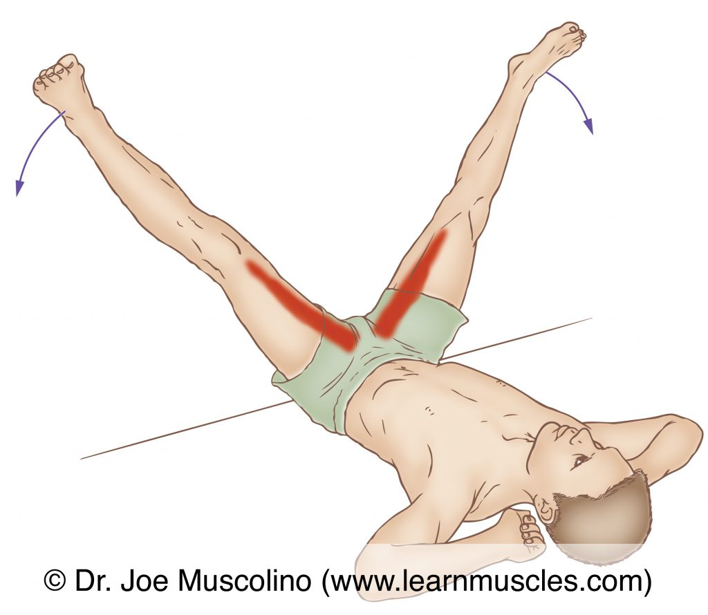 The adductor magnus (of the adductor group) is stretched with abduction and flexion of the thigh at the hip joint.