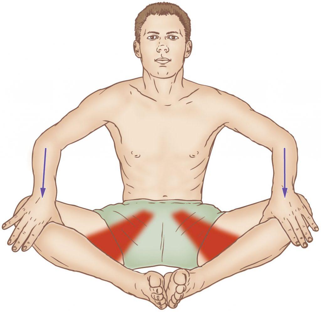 Bilateral adductor musculature stretching
