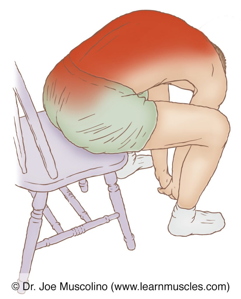 The erector spinae paraspinal musculature is stretched with flexion of the spine. To better stretch one side, opposite-side (contralateral) lateral flexion can be added.