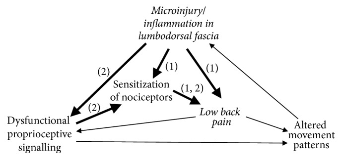Fascial Pain Blog Figure 1