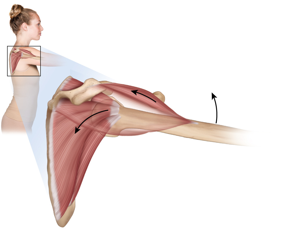 smart phone use can lead to rotator cuff tendinitis