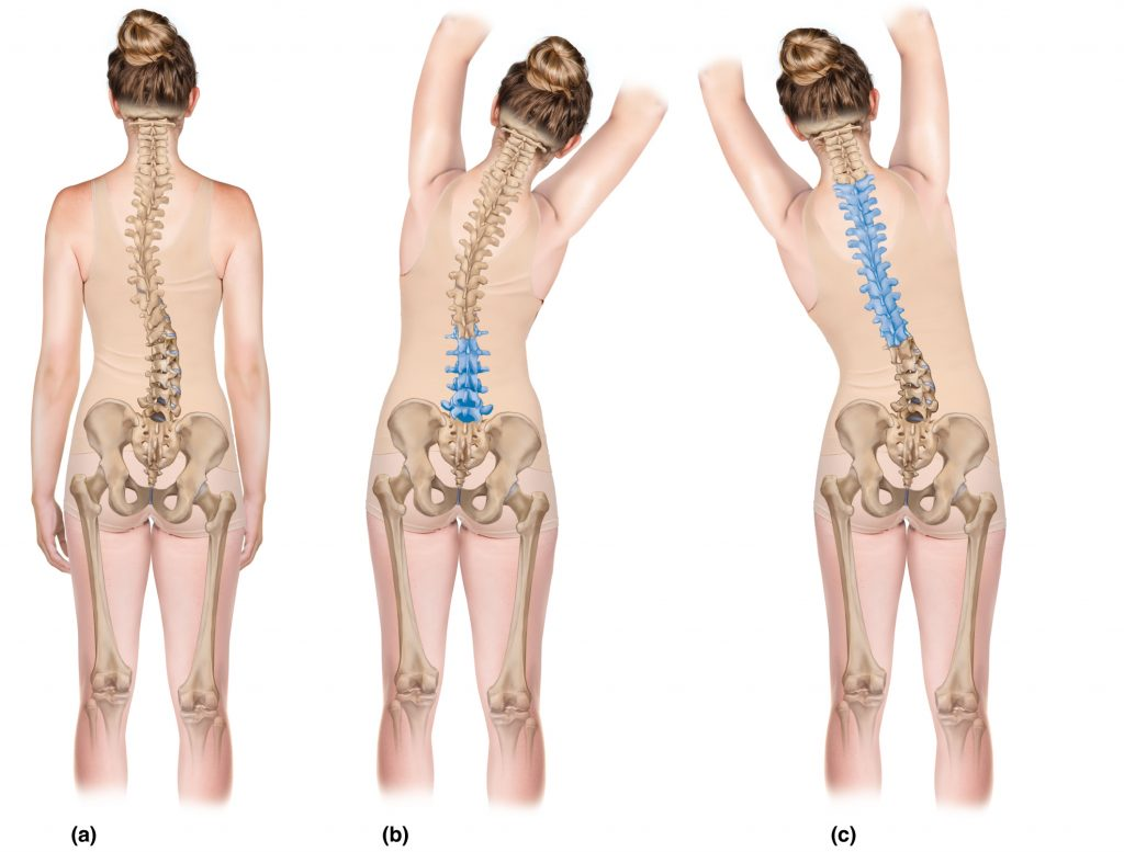 Stretching and Strengthening the Spinal Curves