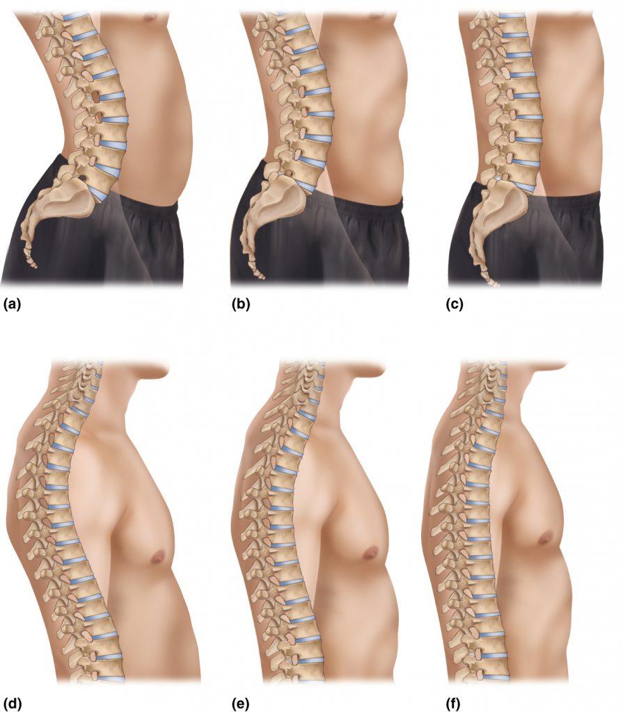 Various thoracic and lumbar spinal curves