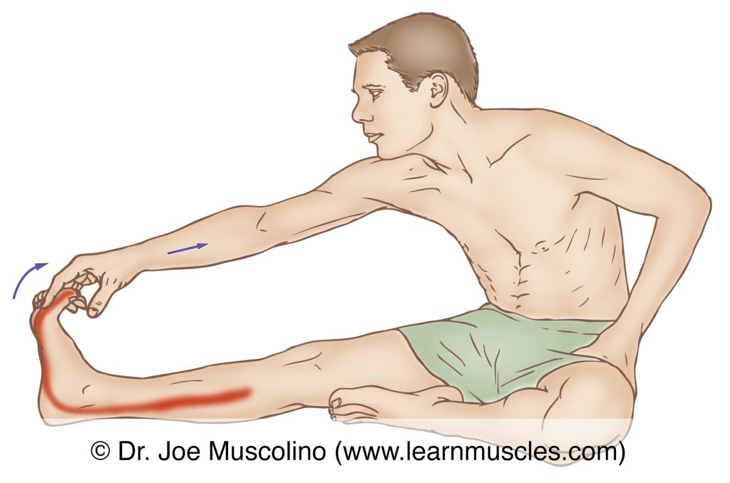 The flexor hallucis longus is stretched with extension of the big toe, and dorsiflexion of the foot at the ankle joint and eversion of the foot at the subtalar joint.