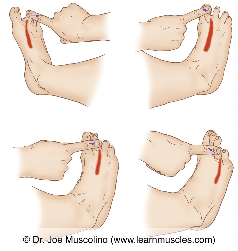 The dorsal interossei pedis (intrinsic musculature of the foot) are stretched by adducting toes #3-4, and abducting in the tibial and fibular directions toe #2, at the metatarsophalangeal joints.