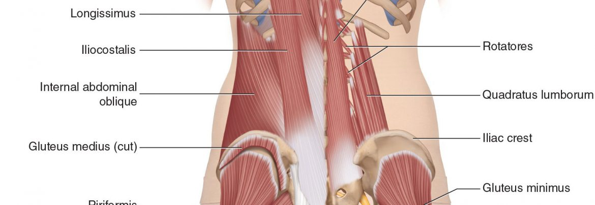 Low Back Pain Archives Learn Muscles