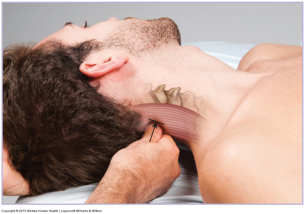 Deep pressure massage to the neck. Permission Joseph E. Muscolino. www.learnmuscles.com