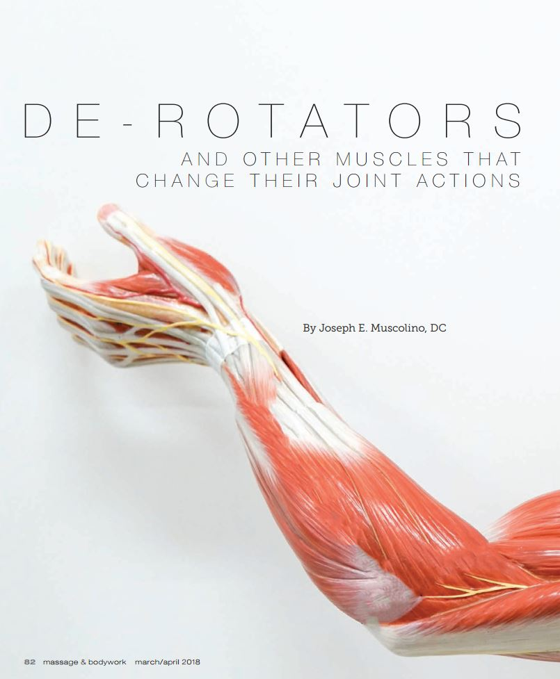 Articles - Learn Muscles
