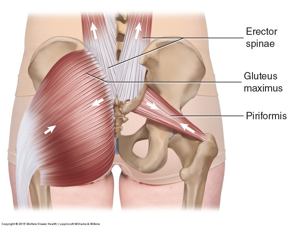 Five Muscles Of Sacroiliac Stabilization Part 1 Piriformis