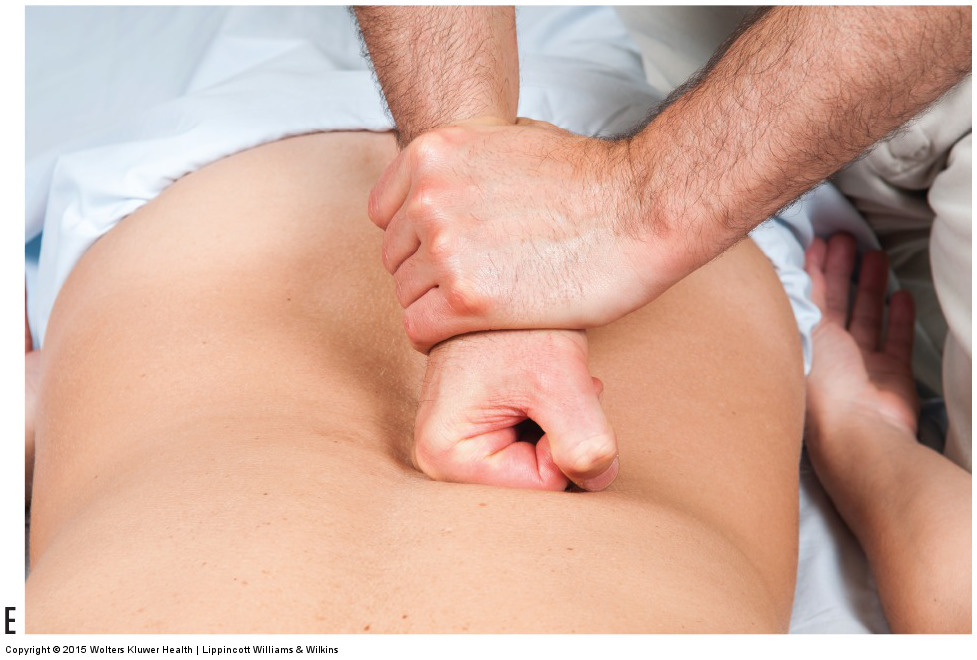Permission Joseph E. Muscolino. Manual Therapy for the Low Back and Pelvis - A Clinical Orthopedic Approach (2013).