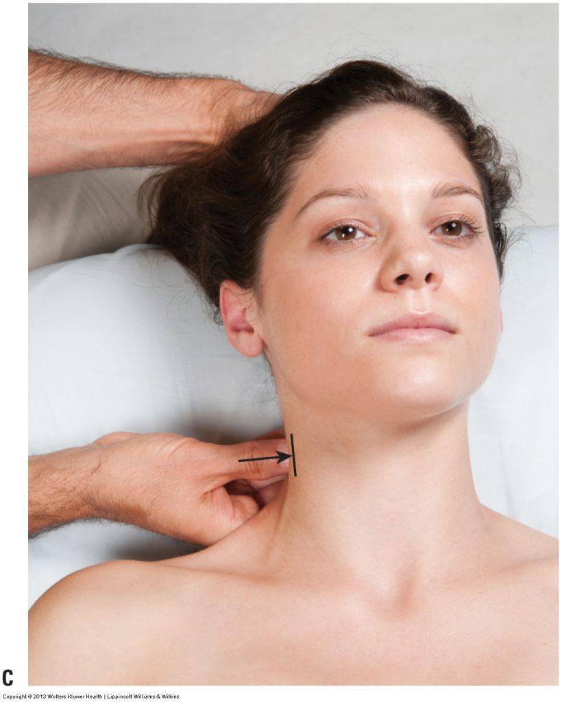 Permission Joseph E. Muscolino. Advanced Treatment Techniques for the Manual Therapist: Neck (2013).