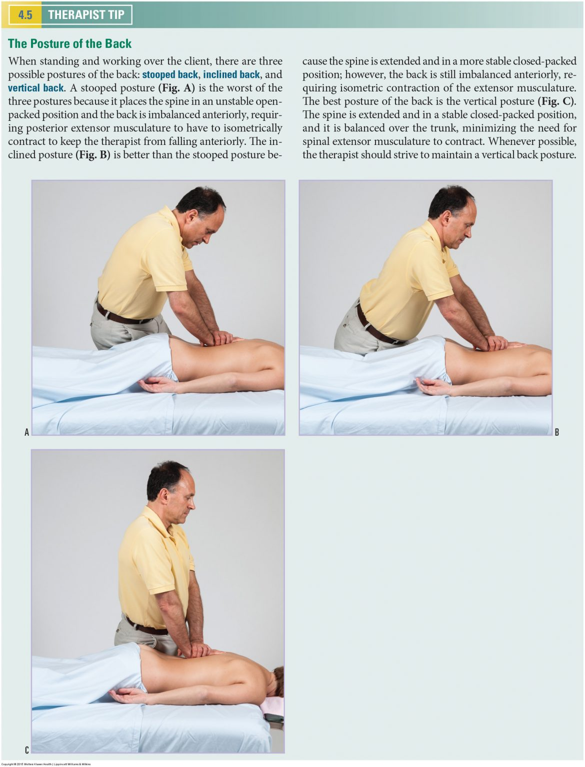 Back Postures. Permission Joseph E. Muscolino. Manual Therapy for the Low Back and Pelvis - A Clinical Orthopedic Approach (2013).