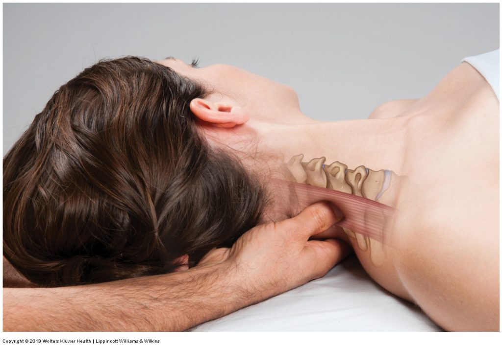 Posterior neck massage to the right side. Permission Joseph E. Muscolino. Kinesiology - The Skeletal System and Muscle Function, 3rd ed. (Elsevier, 2017).