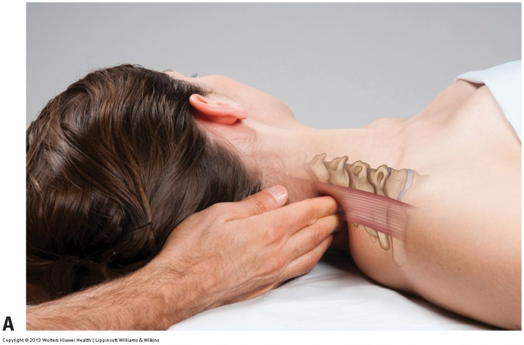 Permission Joseph E. Muscolino. Advanced Treatment Techniques for the Manual Therapist - Neck (2012).