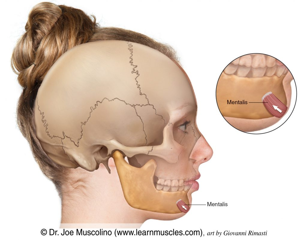 The mentalis, a muscle of facial expression, on the right side of the body.