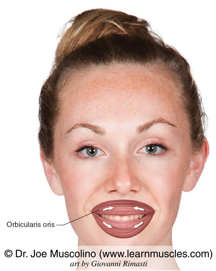 The orbicularis oris muscle bilaterally.