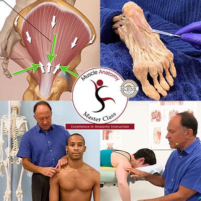 Muscle Anatomy Master Class (MAMC).