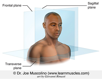 The three cardinal planes are the sagittal, frontal, and transverse planes.