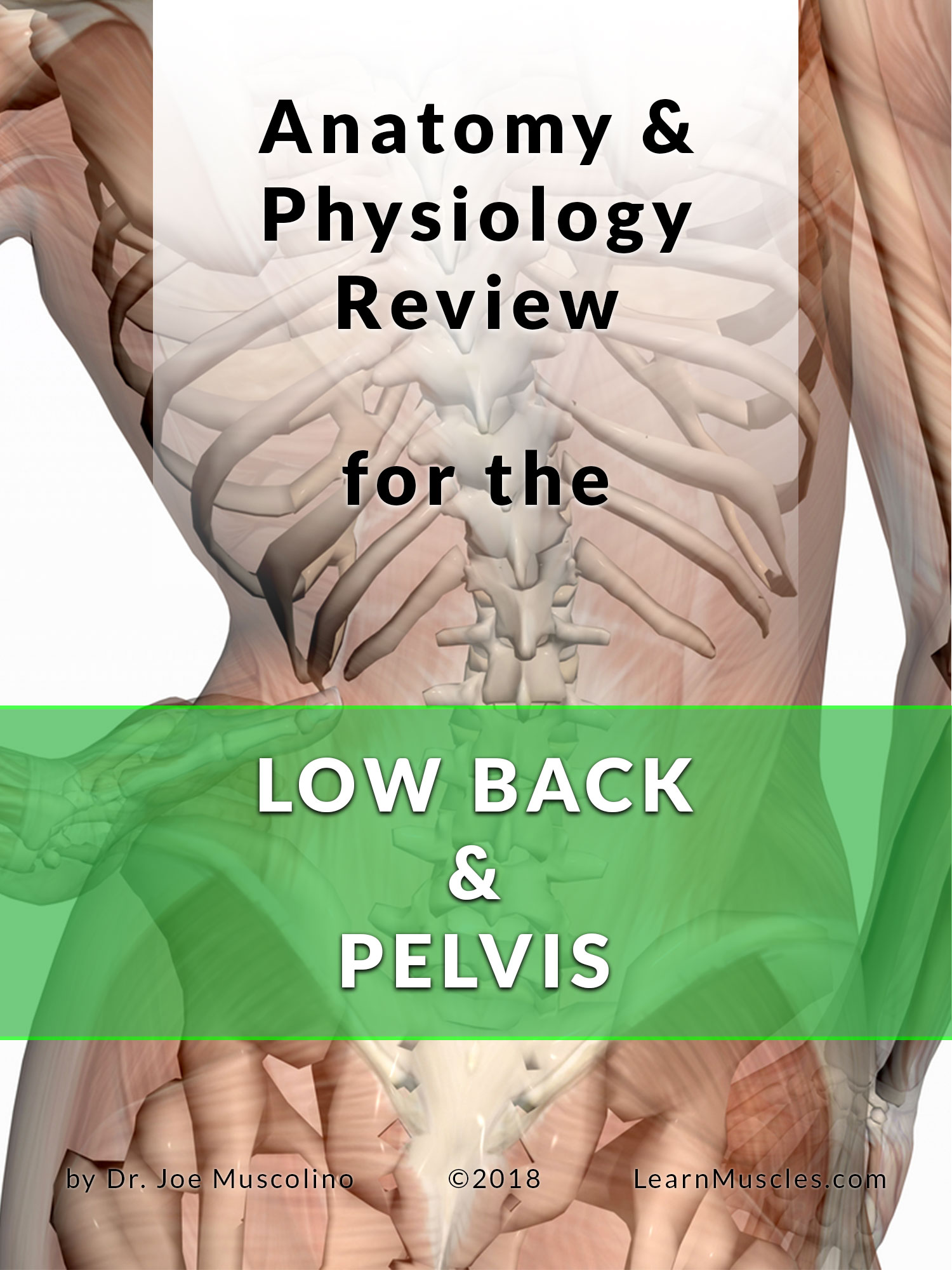 Anatomy and Physiology Review for the Low Back and Pelvis - Learn ...